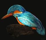 12.MON AMI MARTIN -Art animalier
